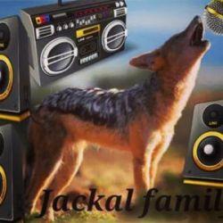 jackal familly - Haso